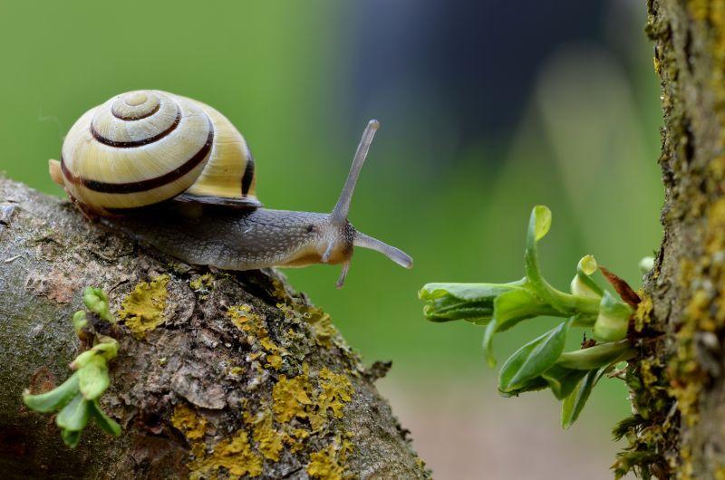 树木上爬行的蜗牛