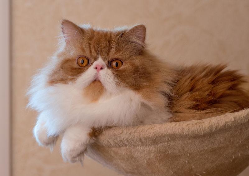 篮子里的可爱猫咪