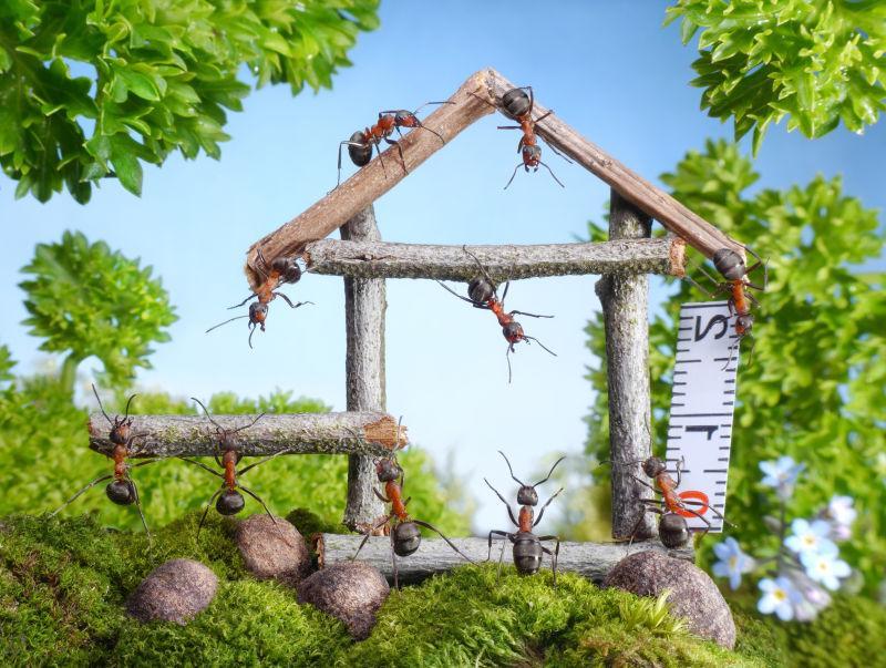 蚂蚁在森林中建造木屋的团队