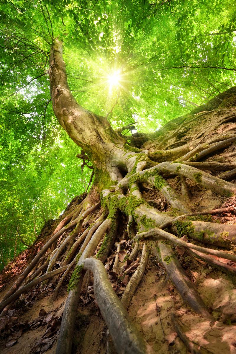 张学松照片_环绕的太阳图片-森林环绕的太阳素材-高清图片-摄影照片-寻图 ...