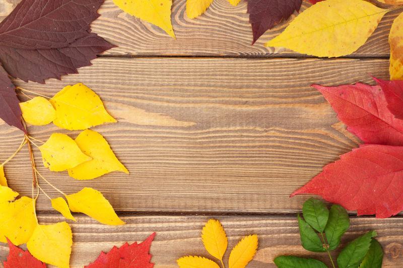 旧木板上的黄色红色绿色棕色的树叶