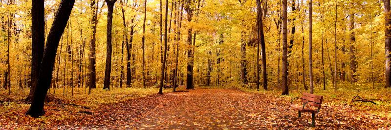 秋季铺满落叶的森林