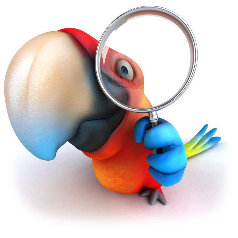 可爱的3D卡通鹦鹉