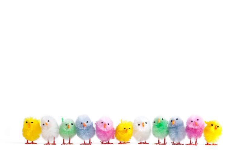 一排人工复活节雏鸡