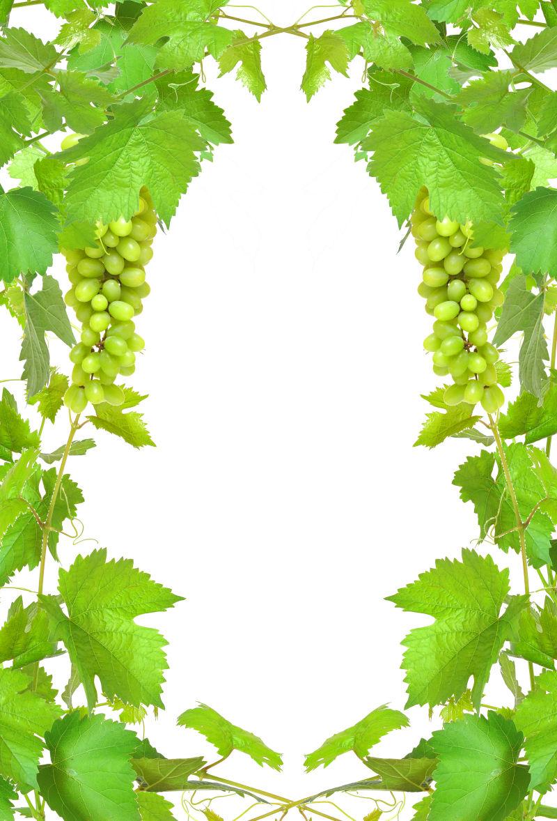 葡萄的叶子和成熟的葡萄