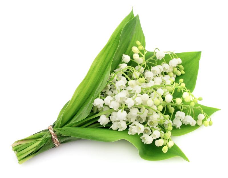 白色背景上的铃兰花束