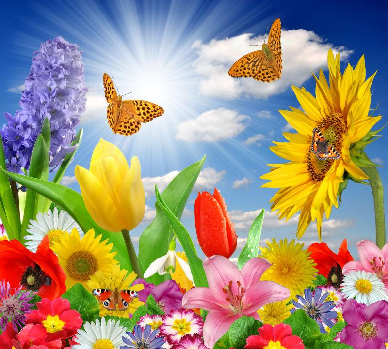 美丽蓝天下的彩色花朵和蝴蝶