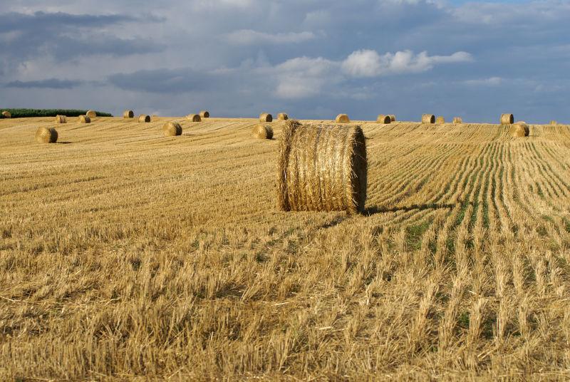 在领域的干草捆在收获