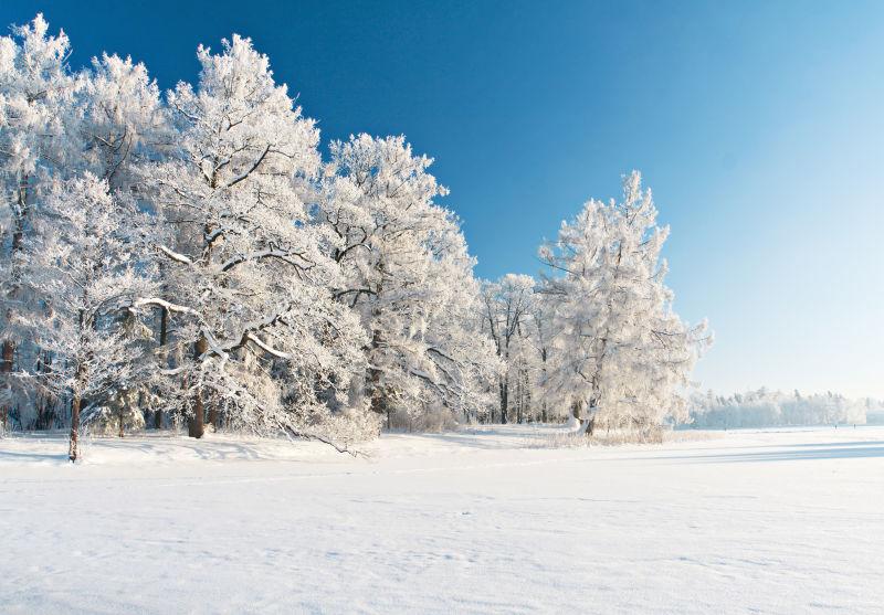 雪中的冬季公园