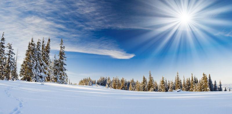 树木覆盖着白雪