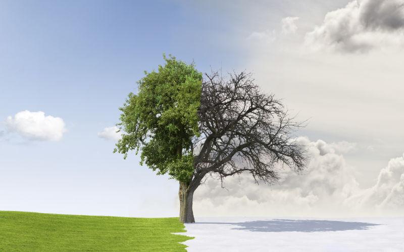 季节变化的大树