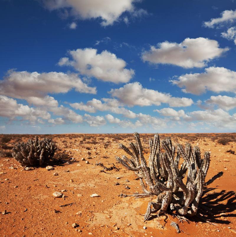 美丽的蓝天下一片金黄色的沙漠