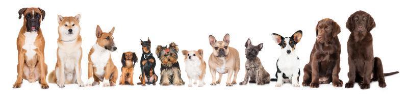 白色背景上坐着的一群狗狗