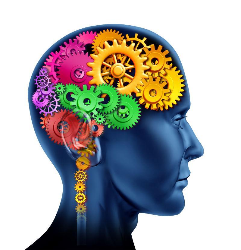 由齿轮和齿轮组成的脑切片
