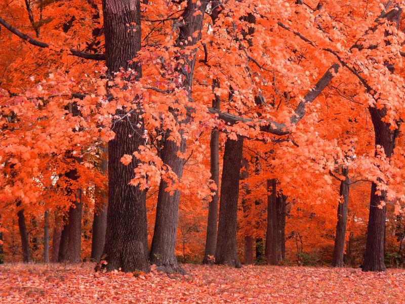 秋天偏低落叶的景观