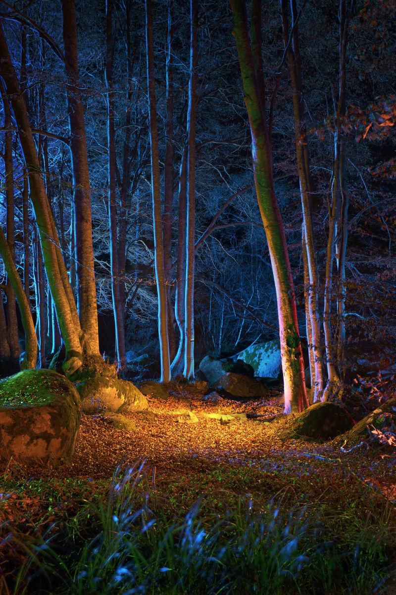 夜色下美丽的森林景色