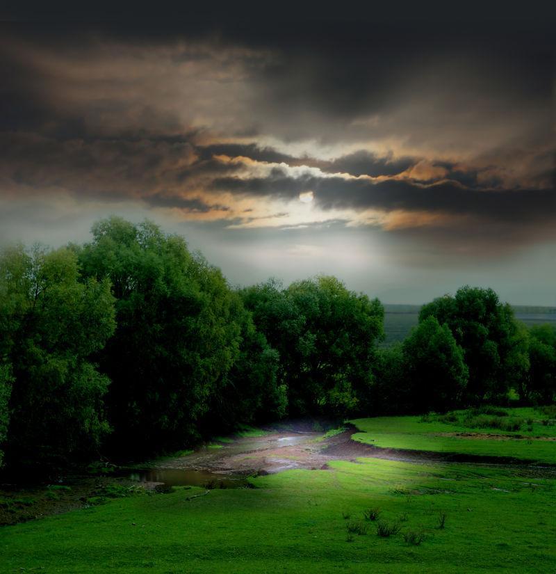 夕阳下美丽的绿色森林
