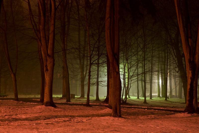 夜色下森林里干枯的树木