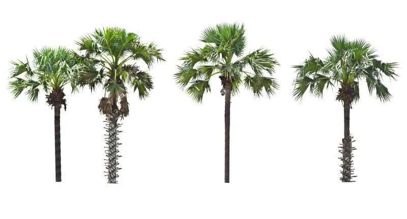 有绿色叶子的棕榈树