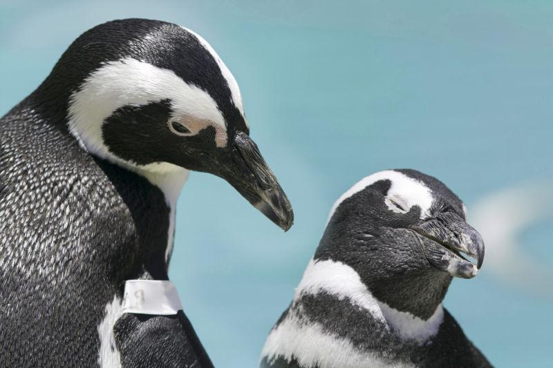 两只可爱的企鹅