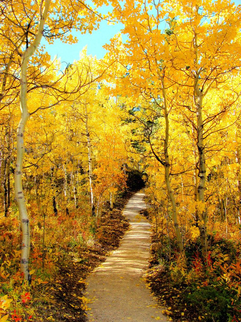 秋季森林小道