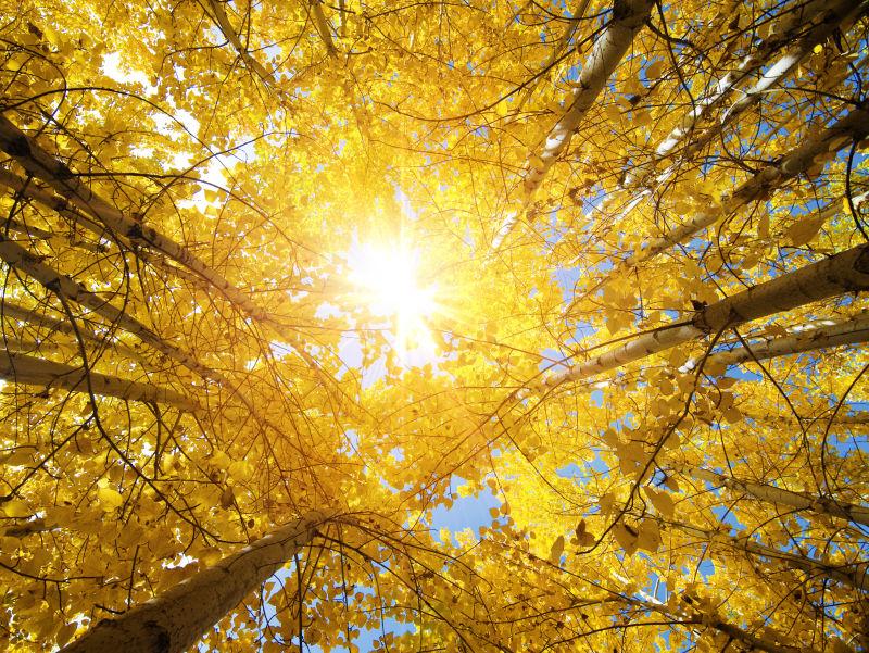 阳光下的秋季落叶