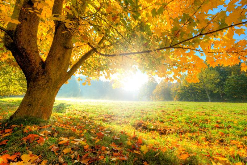 秋季树木森林