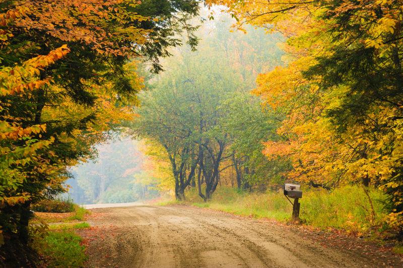 秋季乡村森林