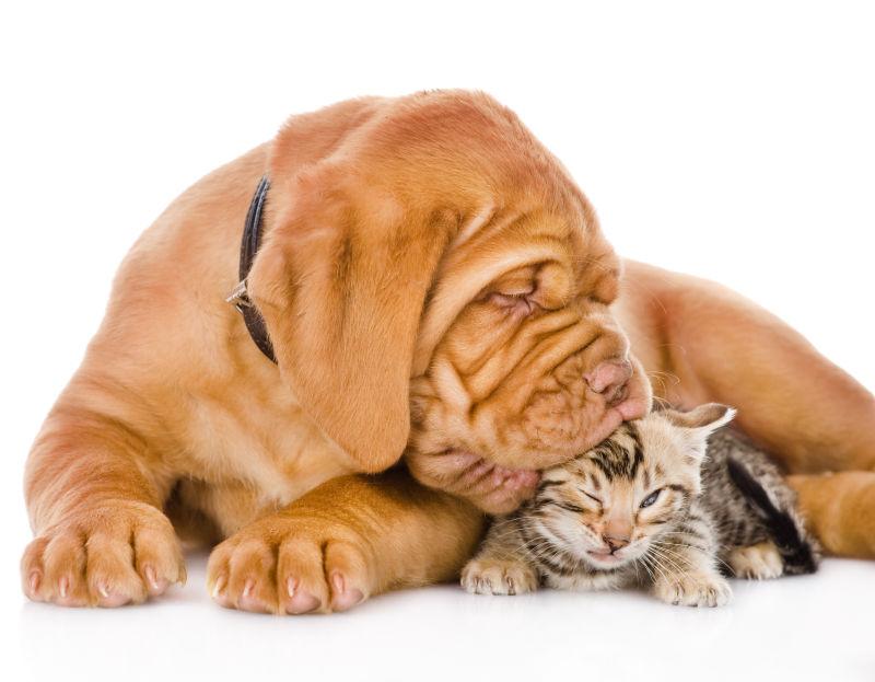 亲吻猫咪头部的小狗