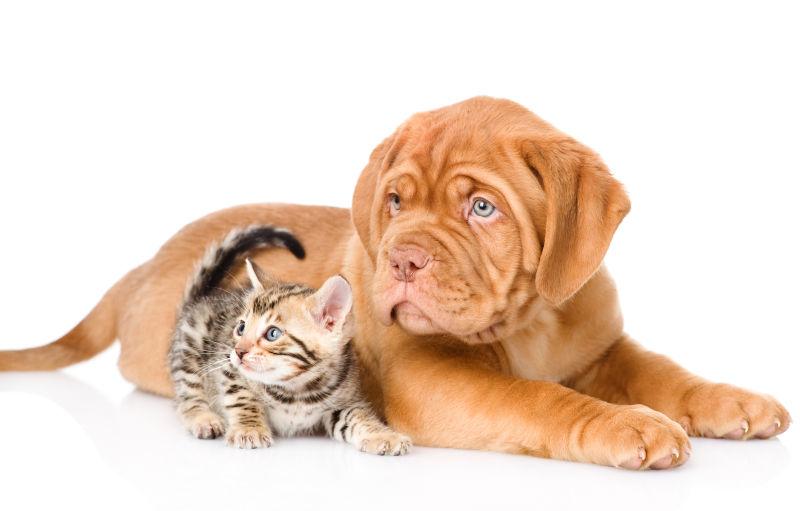一起看向右方的小猫小狗