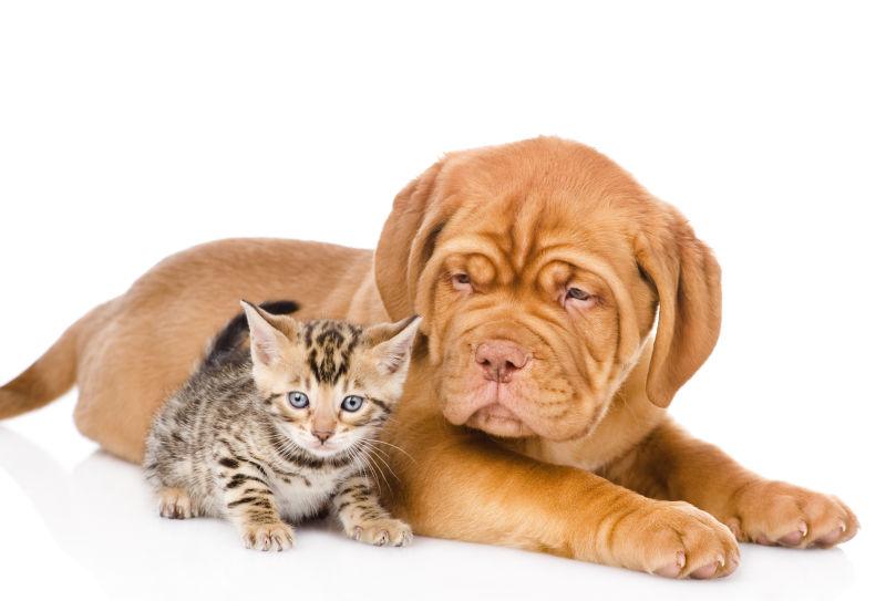 靠在一起的小猫与黄狗
