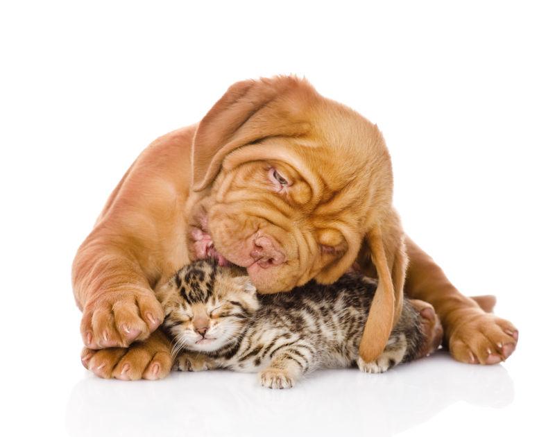 黄狗与小猫咪