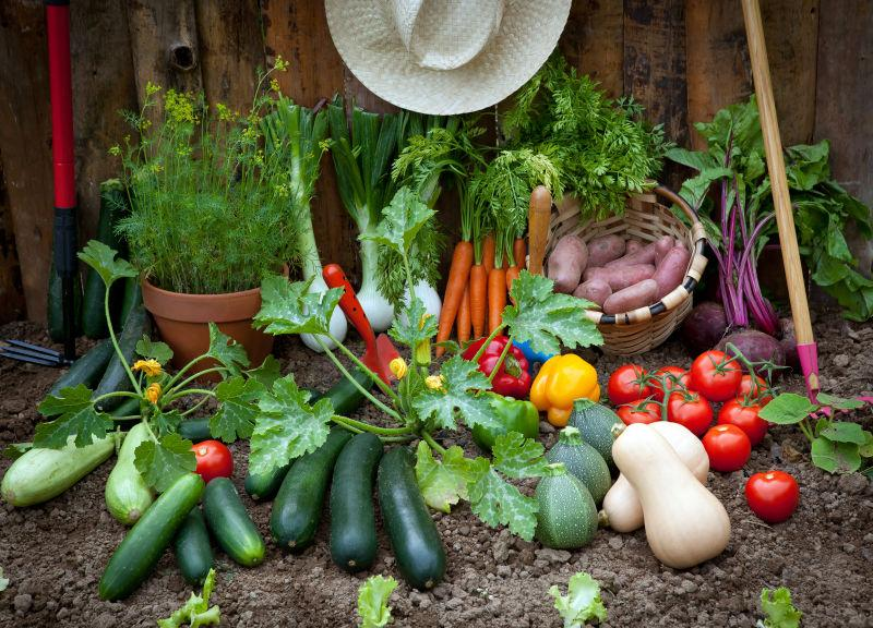 花园里的不同种类的蔬菜