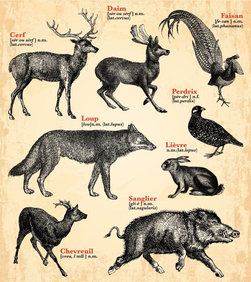 矢量抽象复古野生动物插图