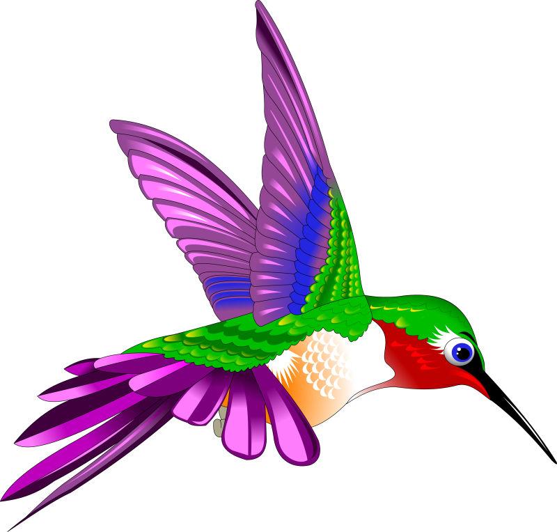 失量卡通彩色红蜂鸟插图