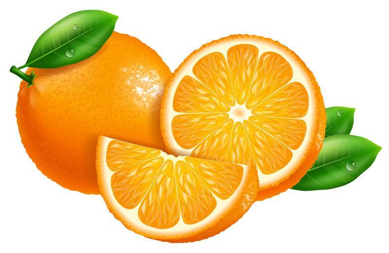 矢量新鲜橙子