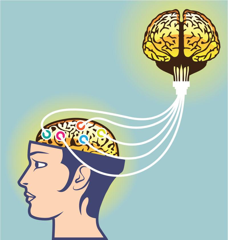 人体的第二大脑矢量插图