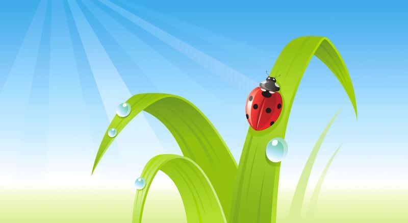 矢量春季瓢虫背景设计