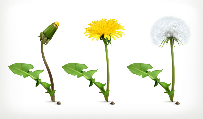 矢量绽放的鲜花设计元素