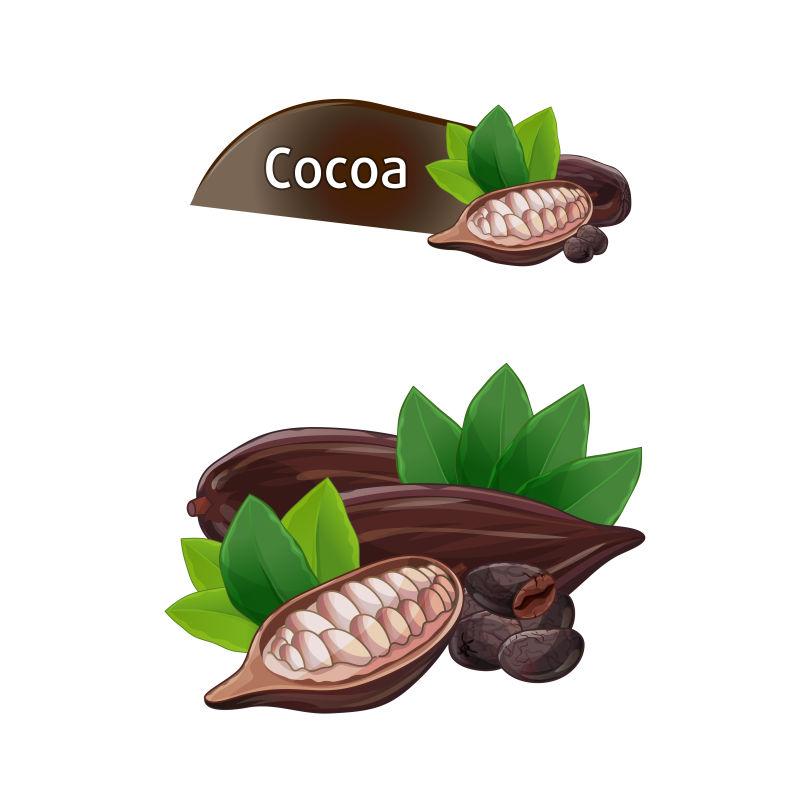 矢量的可可豆
