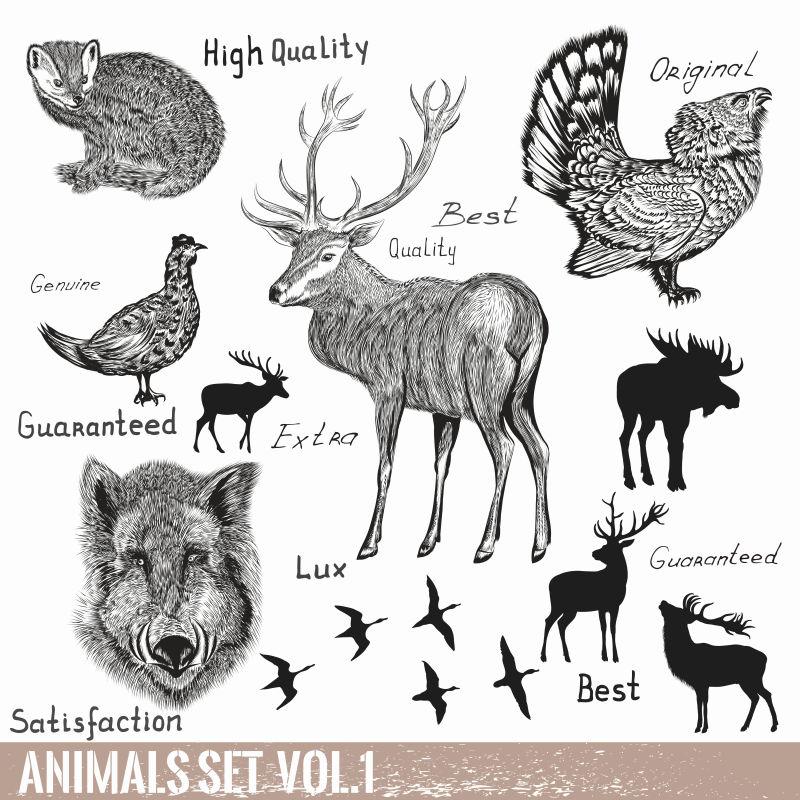 矢量手绘的野生动物集