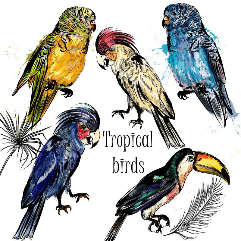 矢量水彩鸟类设计