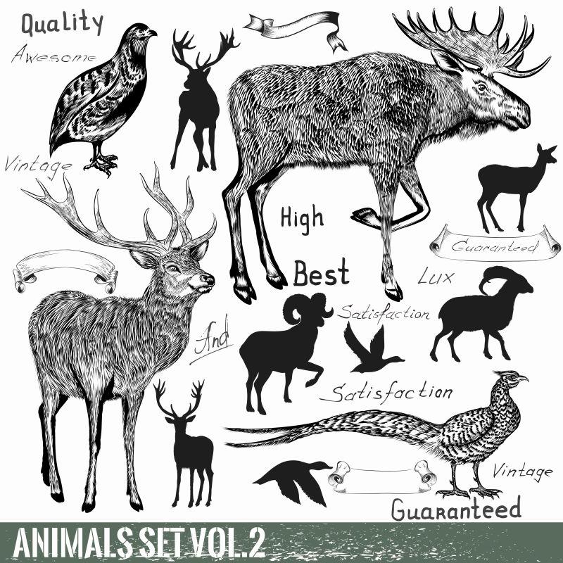 矢量手绘野生动物集