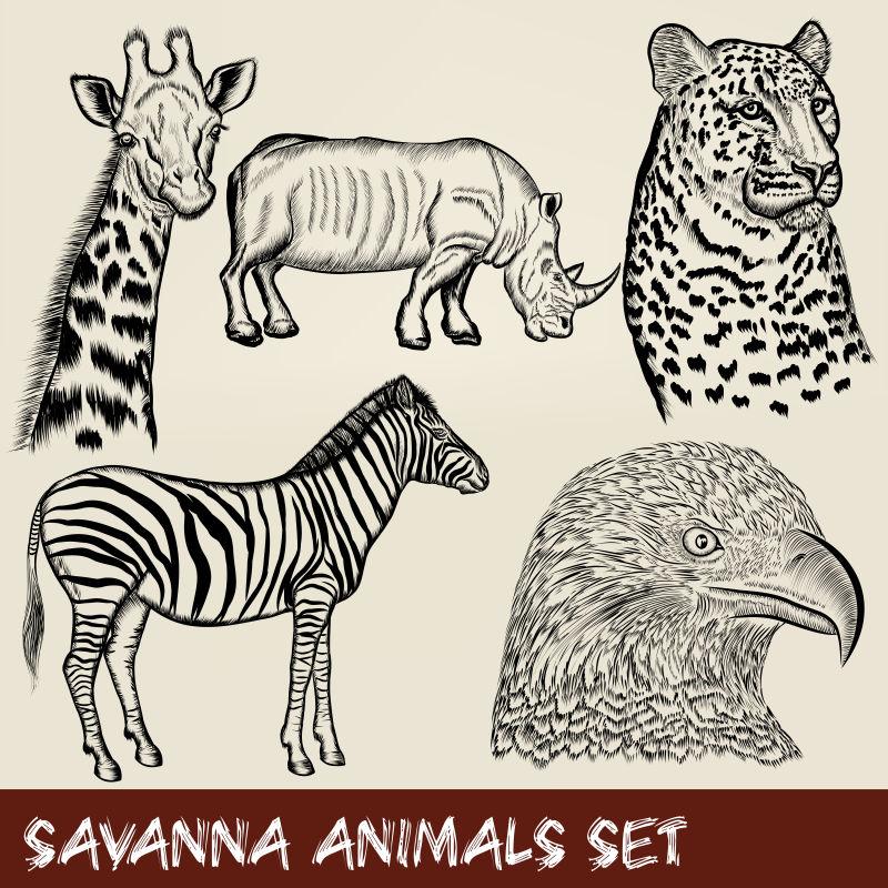矢量手工绘制的动物