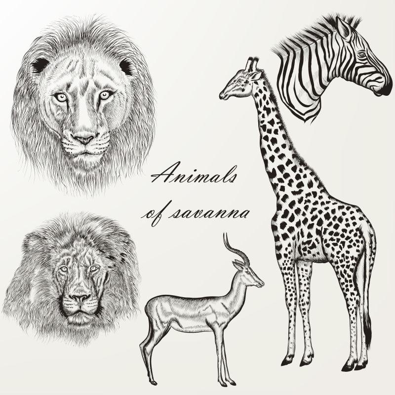 矢量手绘的非洲动物