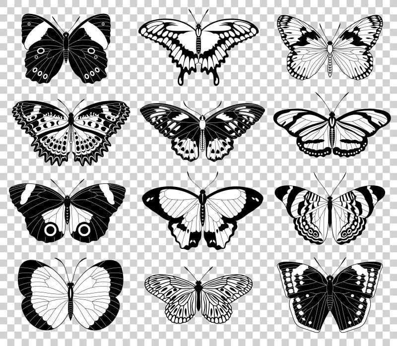 创意矢量单色蝴蝶设计插图