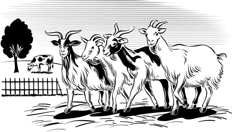 创意矢量农场中放牧归来的山羊插图设计