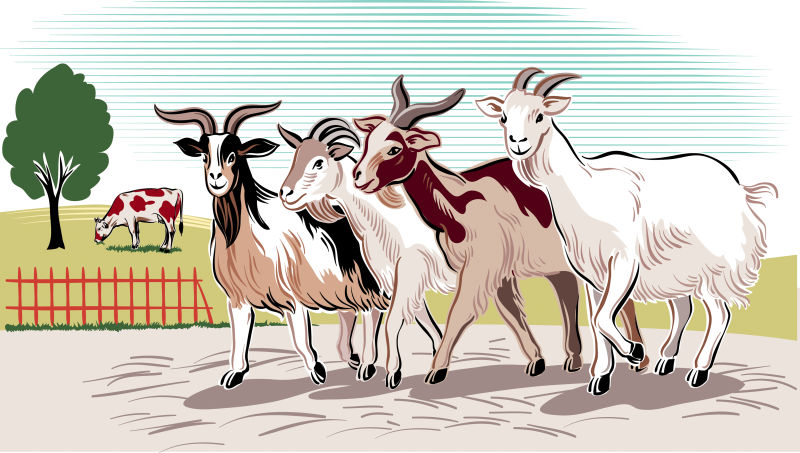 创意矢量卡通农场中的山羊插图