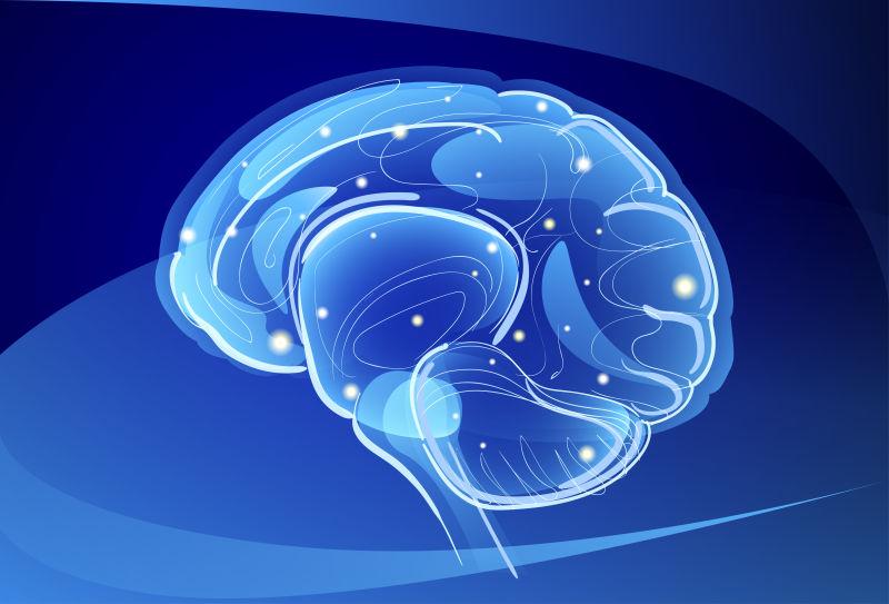 矢量脑神经插图