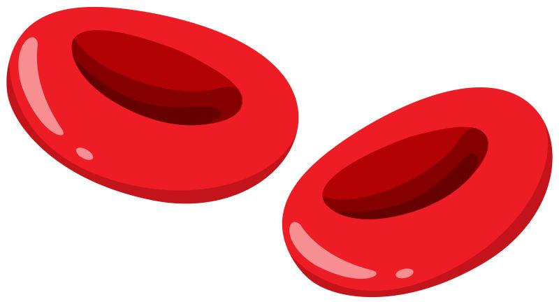 矢量血液里的红色红细胞